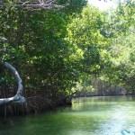 Мечты сбываются или как я стала островитянкой (часть 2)