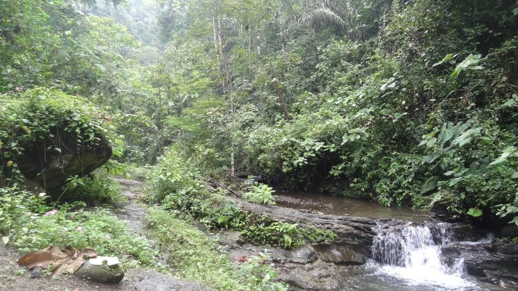 Зона активной жизни в джунглях )