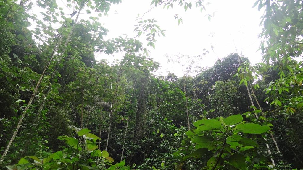 Джунгли Эквадора1