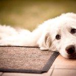 Зачем собаке гвоздь? И какие истории рассказываете Вы?